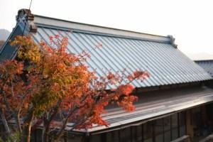 紅葉と茅葺屋根