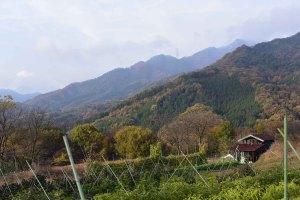 圃場を囲む山々